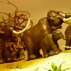 Comprar Museo de la Evolución Humana
